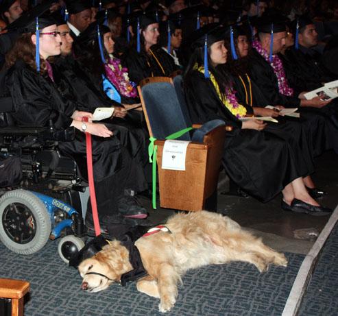 63_2010graddog